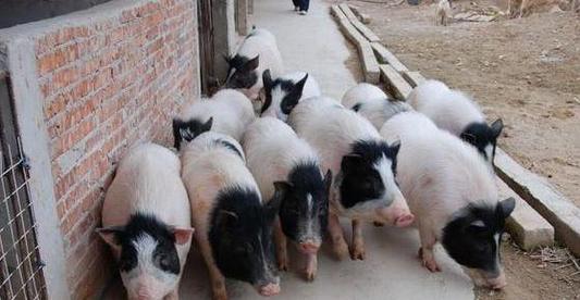 """019创业农村养殖什么最赚钱?这4个特色养殖前景不错"""""""