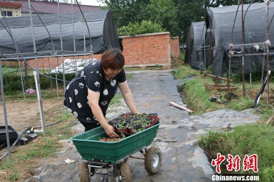 安徽霍邱:青年返乡创业助力家乡扶贫