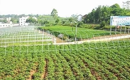 农村创业最赚钱的3个项目,现在入行还不晚,就看你有没有执行力!
