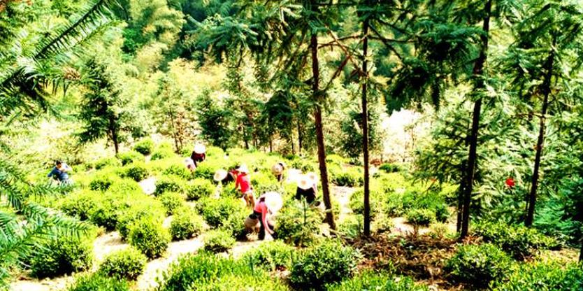 池州市石台县 护航集团 安徽护航生态农业股份有限公司