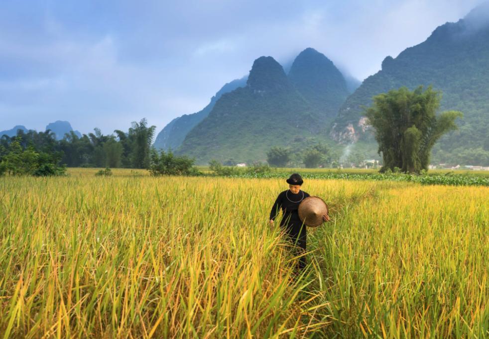 去农村创业,需要关注哪些政策?